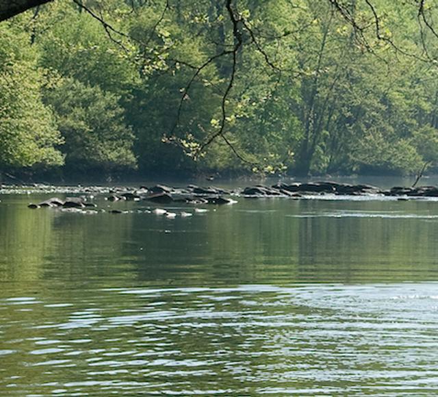 Bassett - Smith River Kayaking